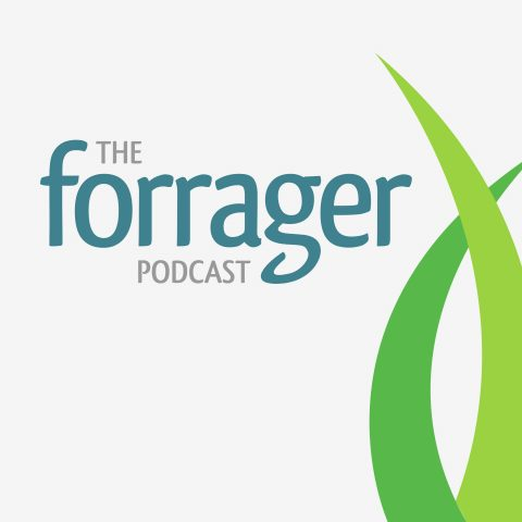 Cover art for The Forrager Podcast